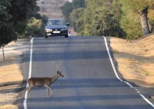 asistencia en carretera la cartuja
